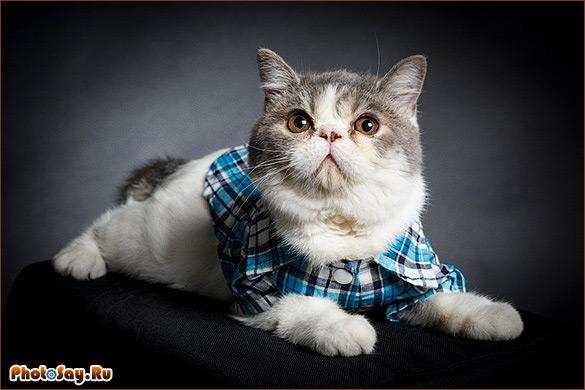 Фотографировать котов можно